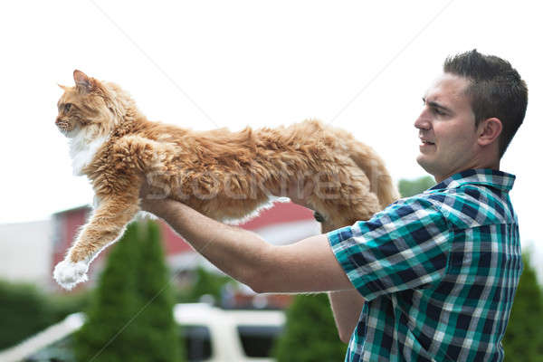 Yellow Maine Coon Cat Stock photo © ArenaCreative