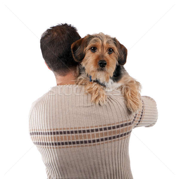 Man Holding a Borkie Dog Stock photo © ArenaCreative