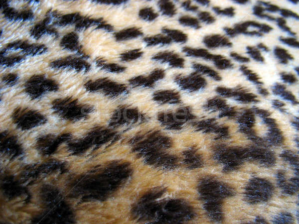 Leopard Print Stock photo © ArenaCreative