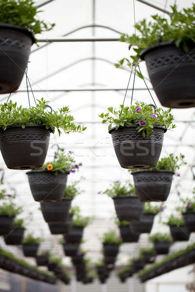 Nursery Hanging Flowers Pots Stock photo © ArenaCreative