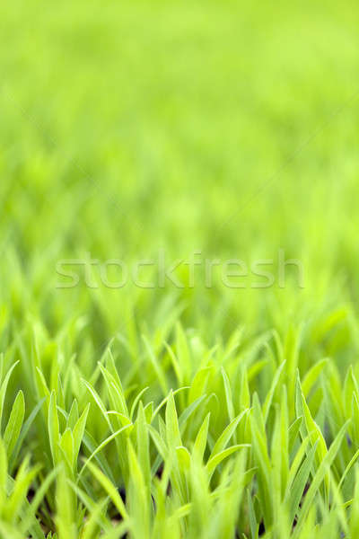Green Grass Foliage Stock photo © ArenaCreative