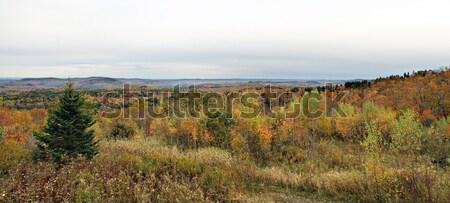 Vermont lomb panorámakép kilátás csúcs ősz Stock fotó © ArenaCreative