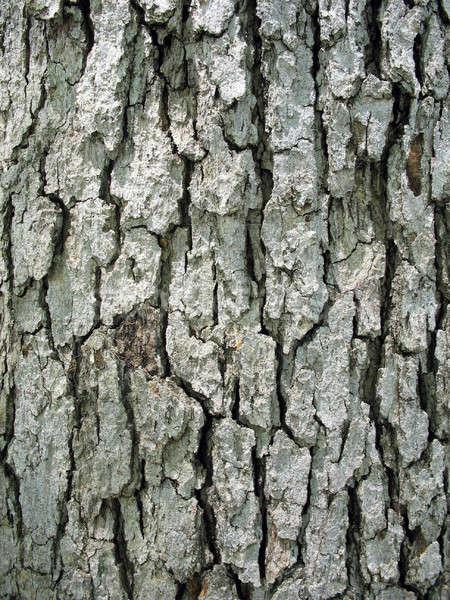 Arbre écorce texture bois Photo stock © ArenaCreative