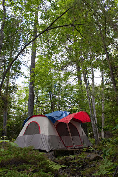 Forest Tent Camping  Stock photo © ArenaCreative