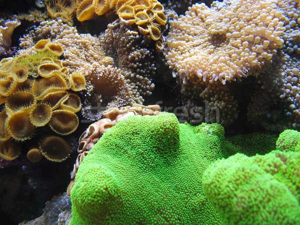 Aquático vida subaquático outro peixe mundo Foto stock © ArenaCreative