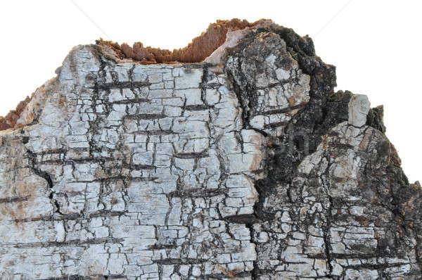 Nyírfa ugatás izolált fehér textúra fa Stock fotó © Arezzoni