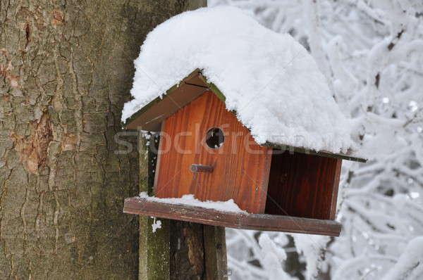 Wooden bird feeder on the tree Stock photo © Arezzoni