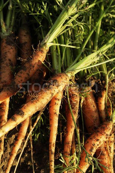 Stok fotoğraf: Havuç · gıda · yeşil · sebze · yeme · pişirme