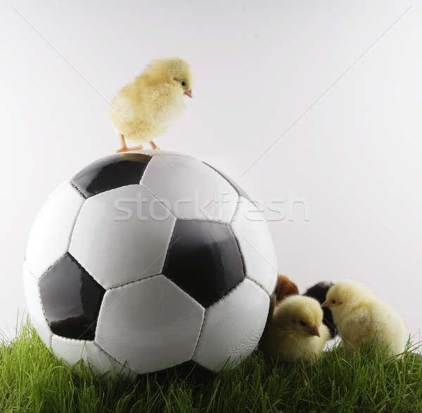 Futbol tavuk top çim spor futbol Stok fotoğraf © Ariusz