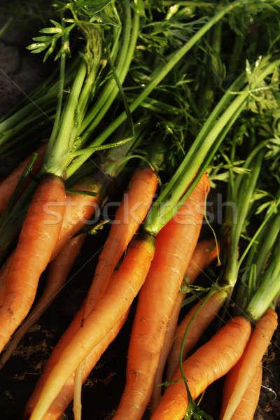 Havuç gıda yeşil sebze yeme pişirme Stok fotoğraf © Ariusz