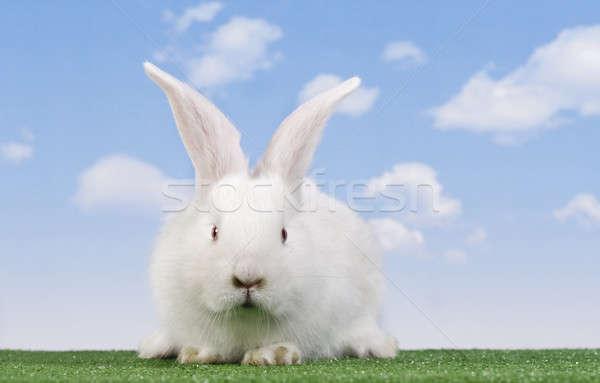 Paskalya tavşan gökyüzü bahar çiftlik tavşan Stok fotoğraf © Ariusz