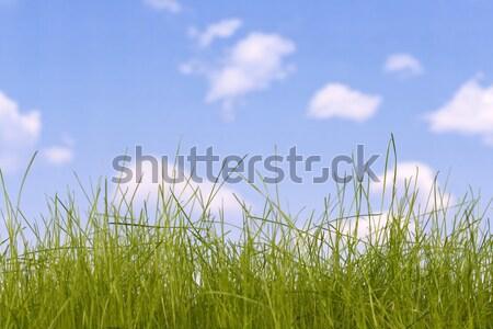 Stok fotoğraf: çim · yeşil · ot · gökyüzü · arka · plan · mavi · bulut