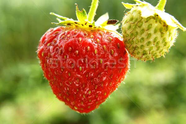 çilek gıda arka plan yaz bitki yeme Stok fotoğraf © Ariusz