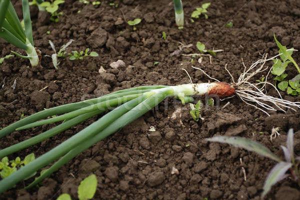 Stok fotoğraf: çiftlik · taze · sebze · meyve · manzara · alan · pazar