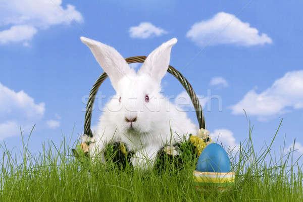 Stok fotoğraf: Paskalya · tavşan · easter · egg · gökyüzü · çim · arka · plan