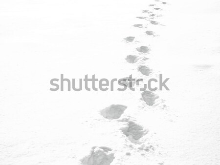 Snow Stock photo © Ariusz