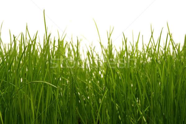 çim golf futbol doğa yaz yeşil Stok fotoğraf © Ariusz