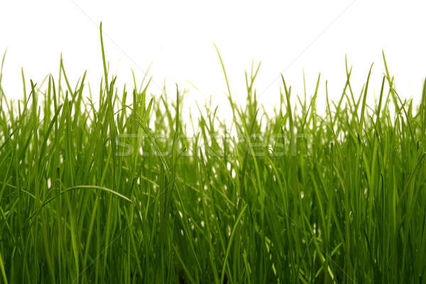 Grass Stock photo © Ariusz
