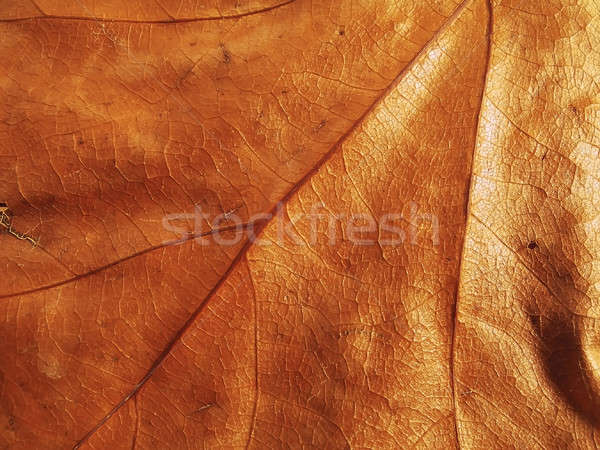 Feuille sécher texture nature lumière fond Photo stock © Ariusz