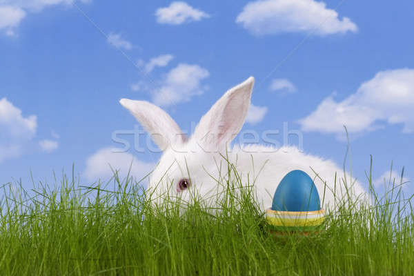 Paskalya tavşan easter egg gökyüzü çim arka plan Stok fotoğraf © Ariusz