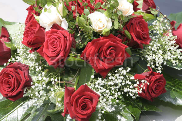 Kırmızı beyaz çiçekler çiçekler sevmek gelin Stok fotoğraf © Ariusz