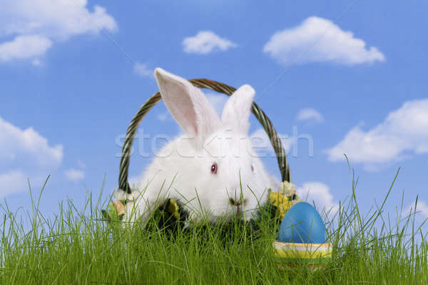 Easter-rabbit Stock photo © Ariusz