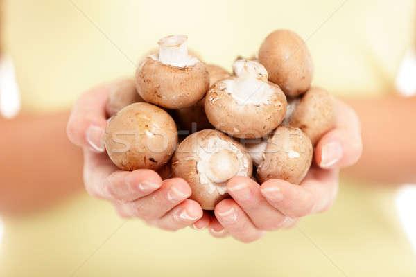Gombák nő mutat tart barna közelkép Stock fotó © Ariwasabi