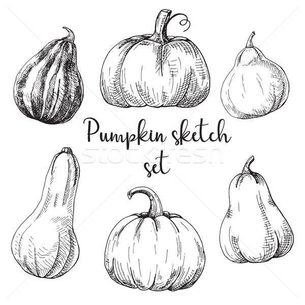 Hand drawn pumpkin set isolated on white background. Vector illustration of a sketch style. Stock photo © Arkadivna