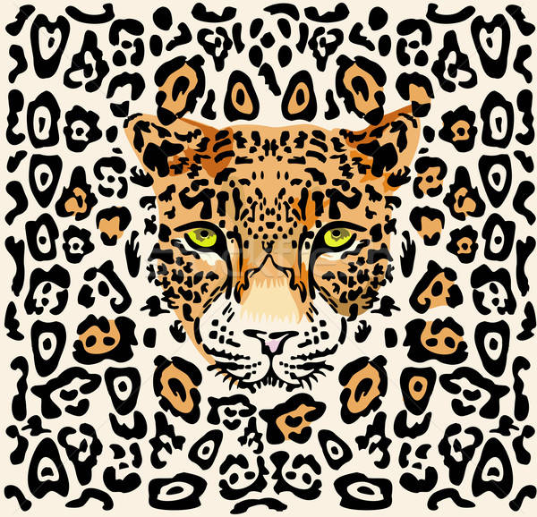 Leopard kaganiec wzór zwierząt pantera oglądania Zdjęcia stock © arlatis