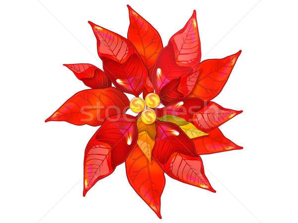Poinsettia  Stock photo © arlatis