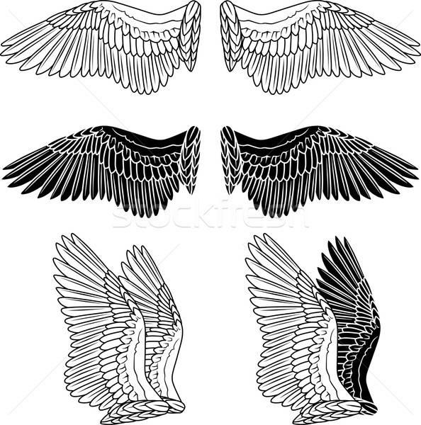 Gołębi skrzydełka odizolowany biały streszczenie ptaków Zdjęcia stock © arlatis