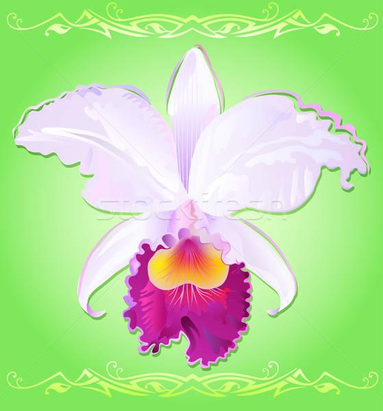 蘭 自然 デザイン 芸術 緑 ピンク ストックフォト © arlatis