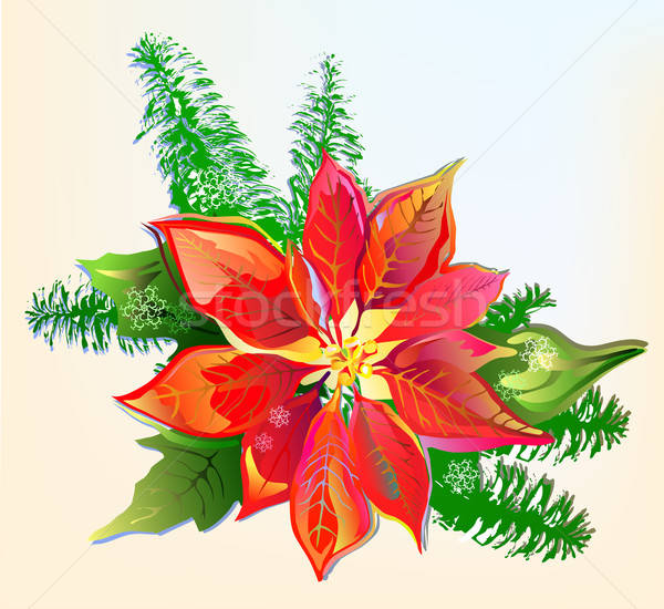 Christmas Poinsettia  Stock photo © arlatis
