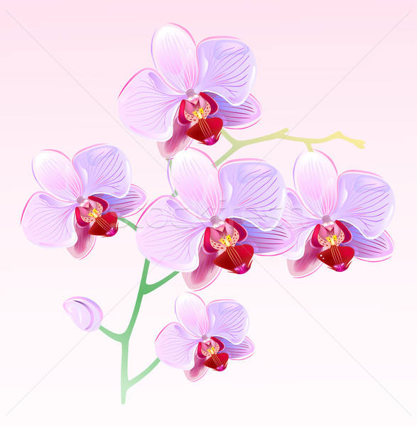 Orchids  Stock photo © arlatis