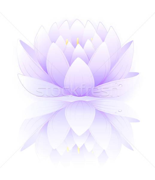 Niebieski Lotos odizolowany biały roślin różowy Zdjęcia stock © arlatis
