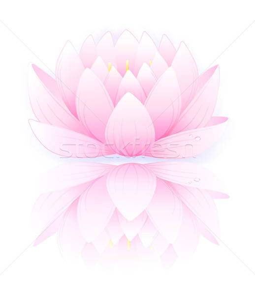 Pink lotus  Stock photo © arlatis