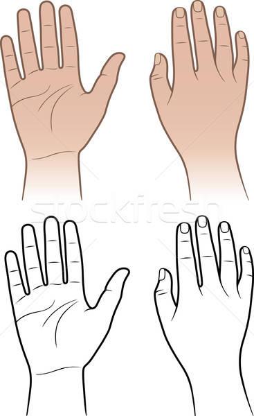 女性 男 手 孤立した 白 手のひら ストックフォト © arlatis