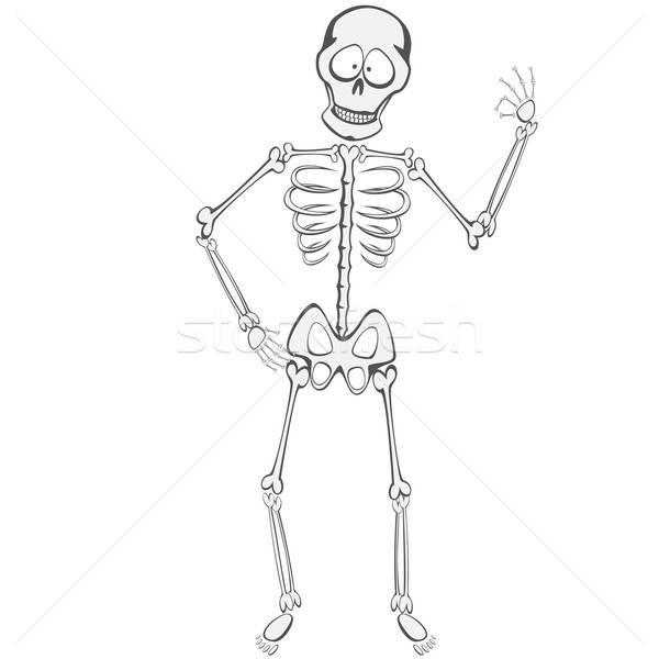 Foto stock: Esqueleto · engraçado · em · pé