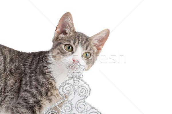 陽気な クリスマス 虎 猫 演奏 ストックフォト © armin_burkhardt