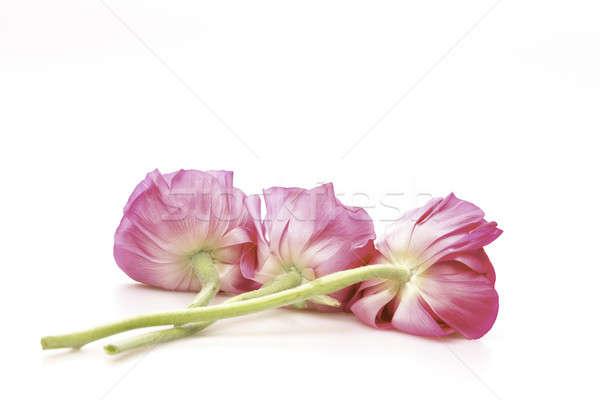 3  花 白 花 ストックフォト © armin_burkhardt
