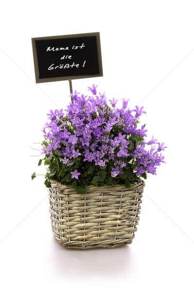 Anne en iyi çiçek sepet çiçekler mor Stok fotoğraf © armin_burkhardt