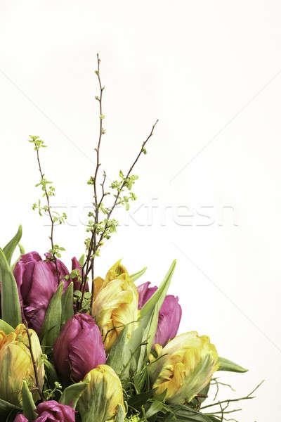 カラフル 花束 チューリップ 黄色 マゼンタ 花 ストックフォト © armin_burkhardt
