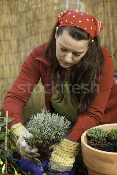 Kadın bahçıvanlık lavanta kırmızı saksı Stok fotoğraf © armin_burkhardt