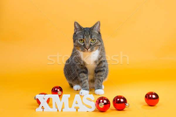 クリスマス ペット ブラウン 虎 猫 ストックフォト © armin_burkhardt