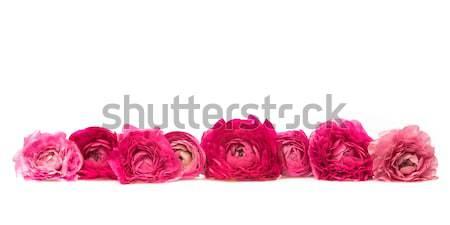 çiçeklenme pembe kırmızı sekiz çiçek Stok fotoğraf © armin_burkhardt