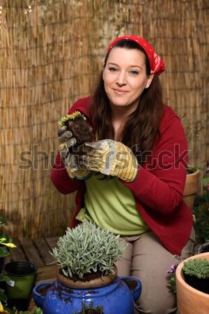 女性 ガーデニング 竹 フェンス 花 春 ストックフォト © armin_burkhardt