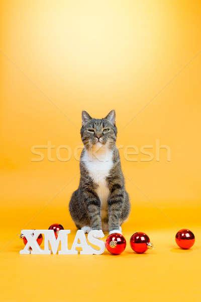 Kış kutlama kahverengi kaplan kedi Stok fotoğraf © armin_burkhardt