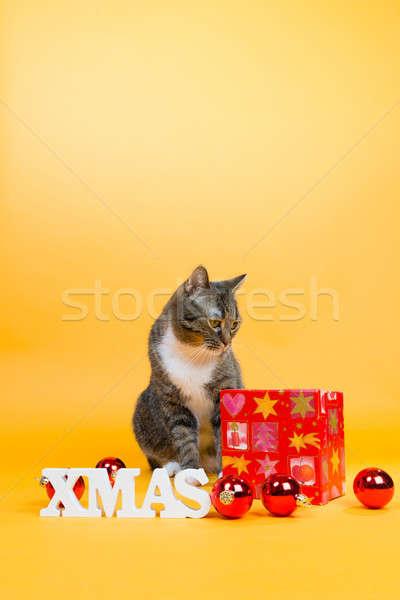 Allegro Natale rosolare tigre cat Foto d'archivio © armin_burkhardt