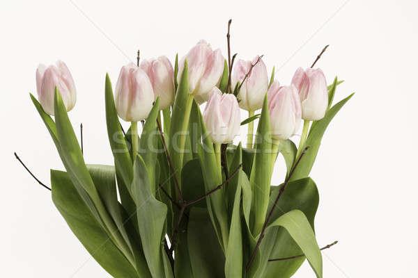 Rosa bouquet tulipani otto fiori soft Foto d'archivio © armin_burkhardt