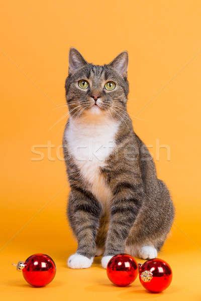 待って クリスマス ブラウン 虎 猫 ストックフォト © armin_burkhardt